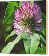 Clover Blossom Day Wood Print