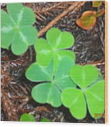 Clovers In The Woods Wood Print