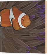 Clownfish In Purple Tip Anemone Wood Print