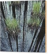 Clumps Of Grass In Water Reflecting Wood Print