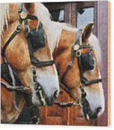 Clydesdale Closeup Wood Print