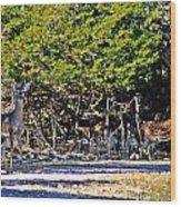 Co Habitating Wood Print