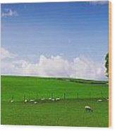 Co Wicklow, Ireland Sheep Wood Print