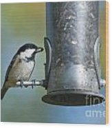 Coal Tit On Feeder Wood Print