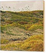 Coastal Plants On Dunes Wood Print