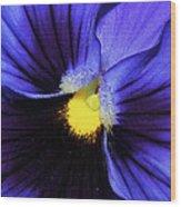 Cobalt Blue Pansy Wood Print