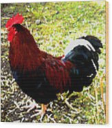 Cock Wood Print by Roberto Alamino