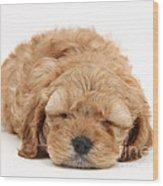 Cockapoo Pup Wood Print