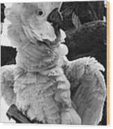 Cockatoo Wood Print
