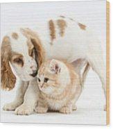 Cocker Spaniel And Kitten Wood Print