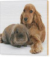 Cocker Spaniel And Rabbit Wood Print