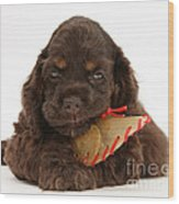 Cocker Spaniel Pup With Chew Treat Wood Print