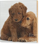 Cocker Spaniel Puppy And Goldendoodle Wood Print