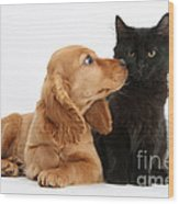Cocker Spaniel Puppy And Maine Coon Wood Print