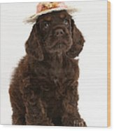 Cocker Spaniel Wearing A Hat Wood Print