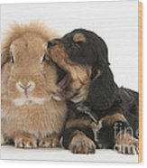 Cockerpoo Pup And Lionhead-lop Rabbit Wood Print