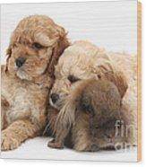 Cockerpoo Puppies And Rabbit Wood Print