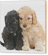 Cockerpoo Puppies Wood Print