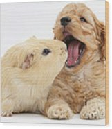 Cockerpoo Puppy And Guinea Pig Wood Print