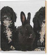 Cockerpoo Pups And Rabbit Wood Print