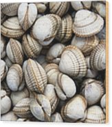 Cockle Shell Background Wood Print