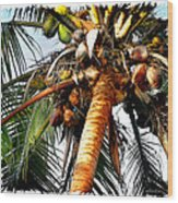 Cocoanuts Squared Wood Print