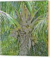 Coconut Palm Wood Print