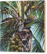 Coconut Palm Inflorescence Wood Print by Karon Melillo DeVega