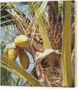 Coconuts 1 Wood Print