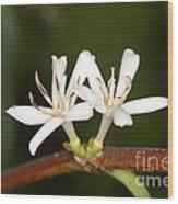 Coffee Flowers Wood Print