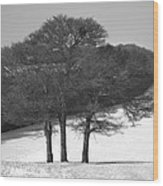 Cold And Bare. Wood Print