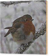 Cold Robin Wood Print