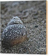Cold Shell Wood Print