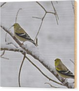 Cold Yellow Finch Walk Wood Print