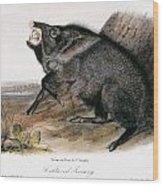 Collared Peccary, 1846 Wood Print
