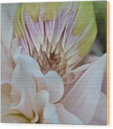 Colliding Beauty Wood Print by Naomi Berhane