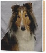 Collie 111 Wood Print