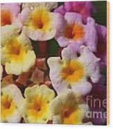 Color Explosion Flowers Wood Print