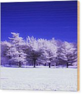 Color Infrared Winter Trees Wood Print