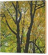 Color Me Yellow Wood Print