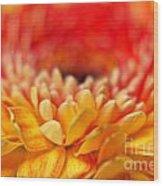 Color Of Summer II Wood Print