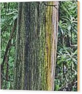 Color Of The Trees Wood Print