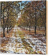Color Play Wood Print