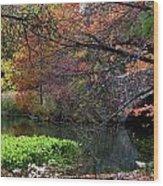 Color Splash In Central Park Wood Print