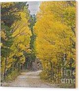 Colorado Autumn Aspen Road Boulder County Wood Print
