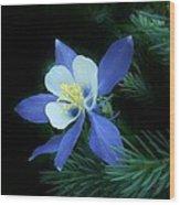 Colorado Christmas Ornament 3 Wood Print