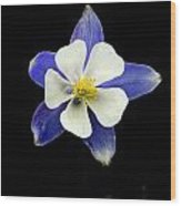 Colorado Columbine Wood Print by Darryl Gallegos