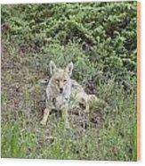 Colorado Coyote Wood Print
