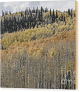 Colorado Gold II Wood Print