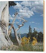 Colorado Hillside Wood Print